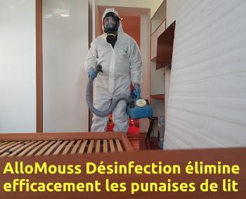 Accueil entreprise belge de d sinfection et de d ratisation bruxelles - Entreprise desinfection punaises lit ...